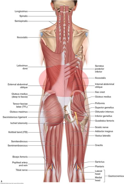 back spasms muscle group picture 2