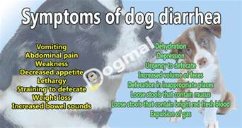 causes of canine diarrhea and loss of appetite picture 2