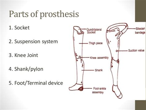 joint anatomy picture 5