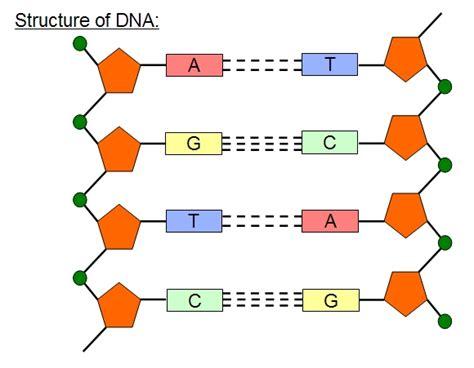 amglogen structural formula picture 11