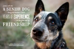 aging dogs picture 18