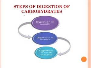 steps of digestion and metabolism of a meal picture 15
