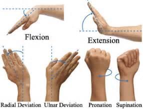 ellipsoid joint picture 3