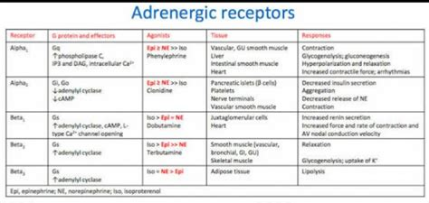 alpha receptors and skeletal muscle picture 9