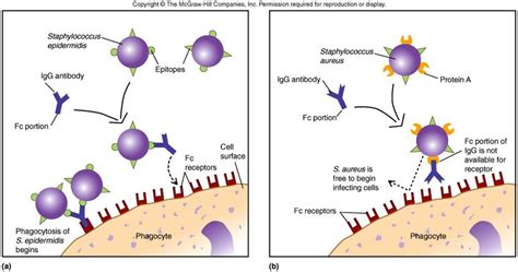 skin cell picture 5