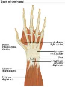 home remedies for wrist joint problem picture 9
