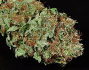 bud smoke picture 1