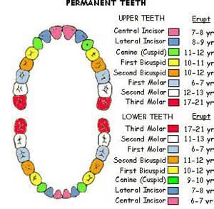 false teeth permenant picture 7