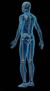 adhesion hip joint pain picture 3
