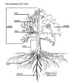 do ginkgo trees have invasive root systems picture 2