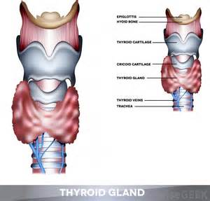 enlargement of the thyroid gland picture 6