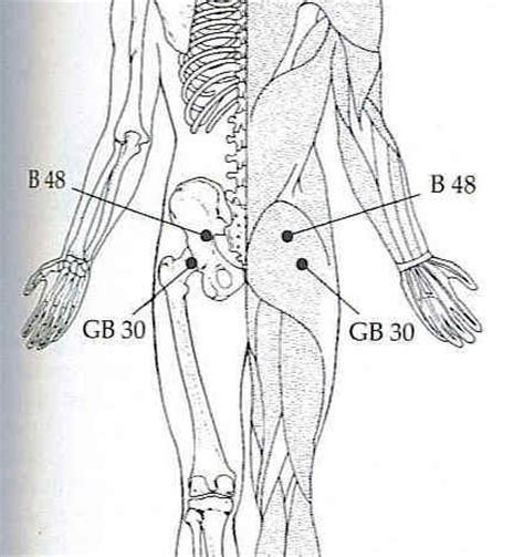 acupressure points for pelvic muscle spasms picture 4