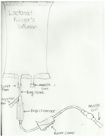 lactated ringers solution for cats without prescription picture 25