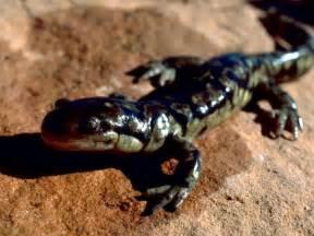 amphibian diet picture 19