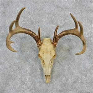 deer skull and h picture 1