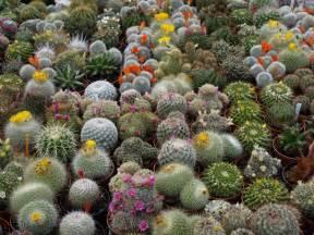 cactus picture 10