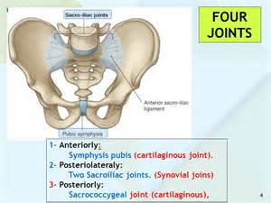 source hip & joint picture 10