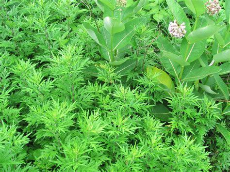 herbal magic picture 2