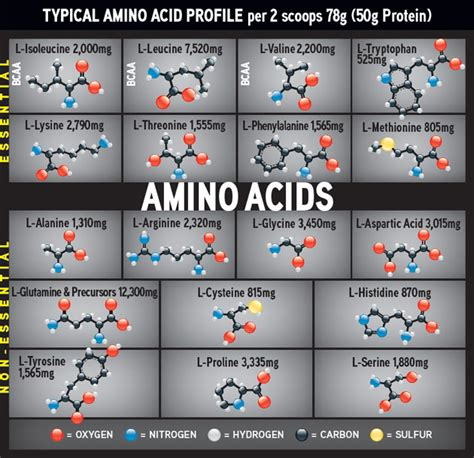 amino acids muscle picture 11
