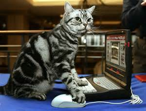 does resthyro work for cats picture 7