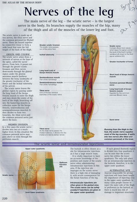 pain relief in pregnancy picture 5