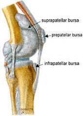 suprapatellar joint effusion picture 5