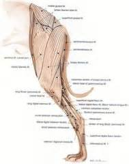 injections to build joint tissue canine picture 19
