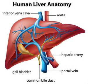 how to inflate your liver picture 13