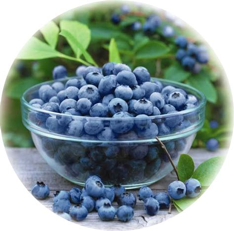 acai berries supplements picture 10