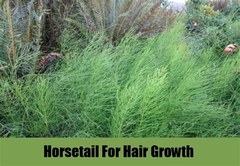 horsetail silica, does it help hair picture 2