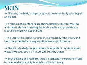 functions of skin picture 13
