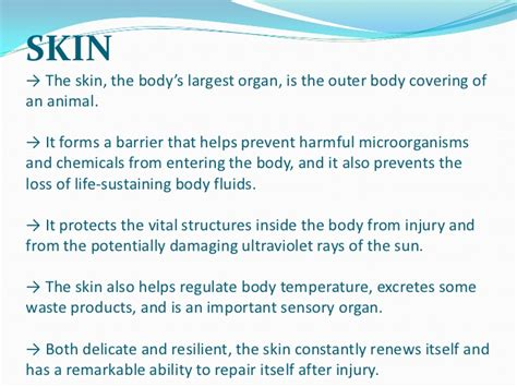 functions of the skin picture 6