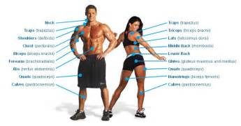 muscle chart picture 6