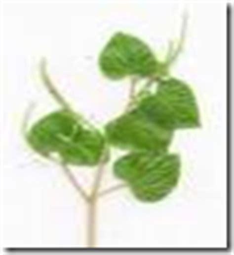 herbal medicine bato sa apdo picture 13