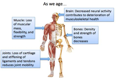 Loss of muscle in elderly picture 1