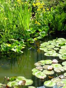 water plantain picture 15