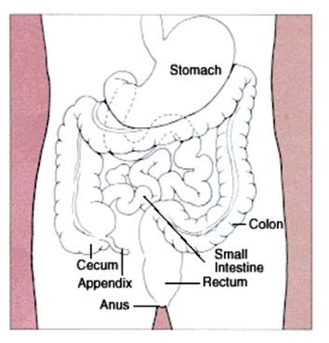 can a colon cleanse cause vaginal bleeding picture 5