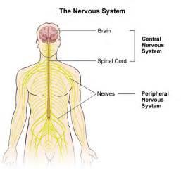 central nervous system injury skin rash picture 14