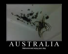 black spider fat burner is it bad for picture 2