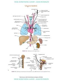 list of jamaican herbs for nerve and muscle picture 5