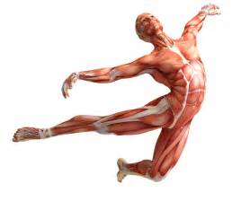 increase testosterone with yoga picture 9