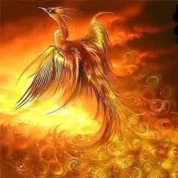 how can individuals buy phoenix lipovicine picture 1