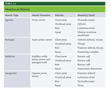 agonist and antagonist muscles list picture 11