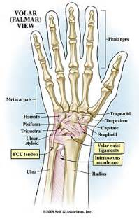 joint pain in wrist area radiating down mid picture 5