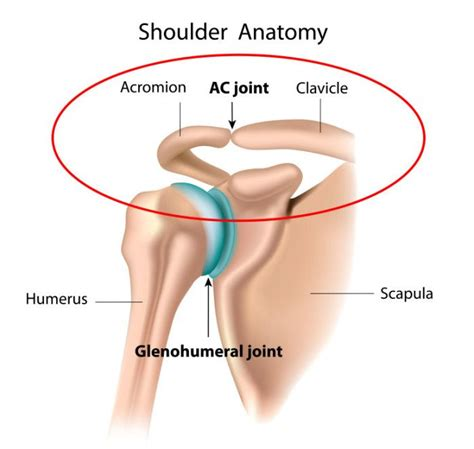 acromio-clavicular joint picture 10