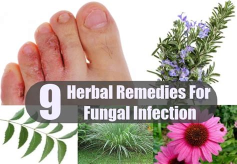 fungal herbal supplement picture 3