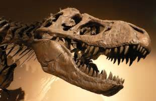 t rex amount of teeth picture 3