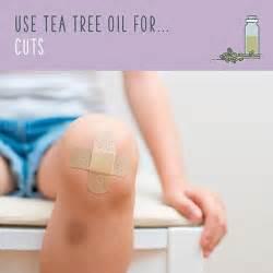 australian tree tea used for batholin cyst picture 9