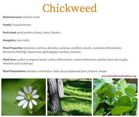 herbal cold remedies picture 2