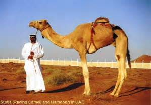 camel h pictures picture 9